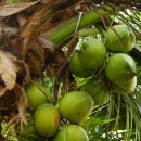 February Foodwatch Newsletter - Coconuts: a new super food or just great marketing?