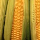 Q. Is high fructose corn syrup worse than sugar?