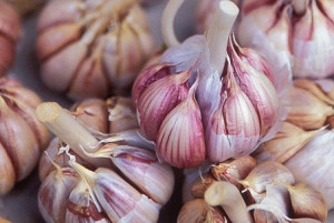Super foods, the ultimate health foods – Garlic