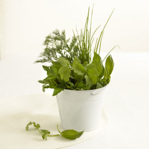 Super foods, the ultimate health foods – the benefits of basil, rosemary, oregano and other green herbs
