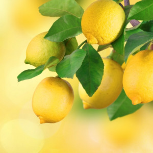 June Foodwatch Newsletter - Lemons, lots to love