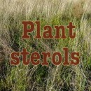 What are plant sterols?