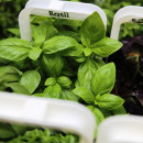 Read on - here I take a look at these cute mini-pots of fresh growing herbs for your kitchen. Are they worth buying? Are they easy to look after?