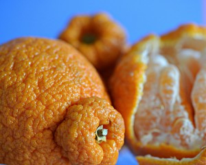 Sumo citrus – don't judge this fruit by its 'cover'!