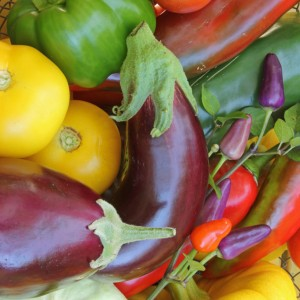 Lectins - what you really need to know