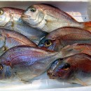 Mercury in fish in Australia