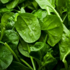 Super foods, the ultimate health foods – Spinach